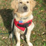 10 Reasons Every Dog Needs A Life Jacket