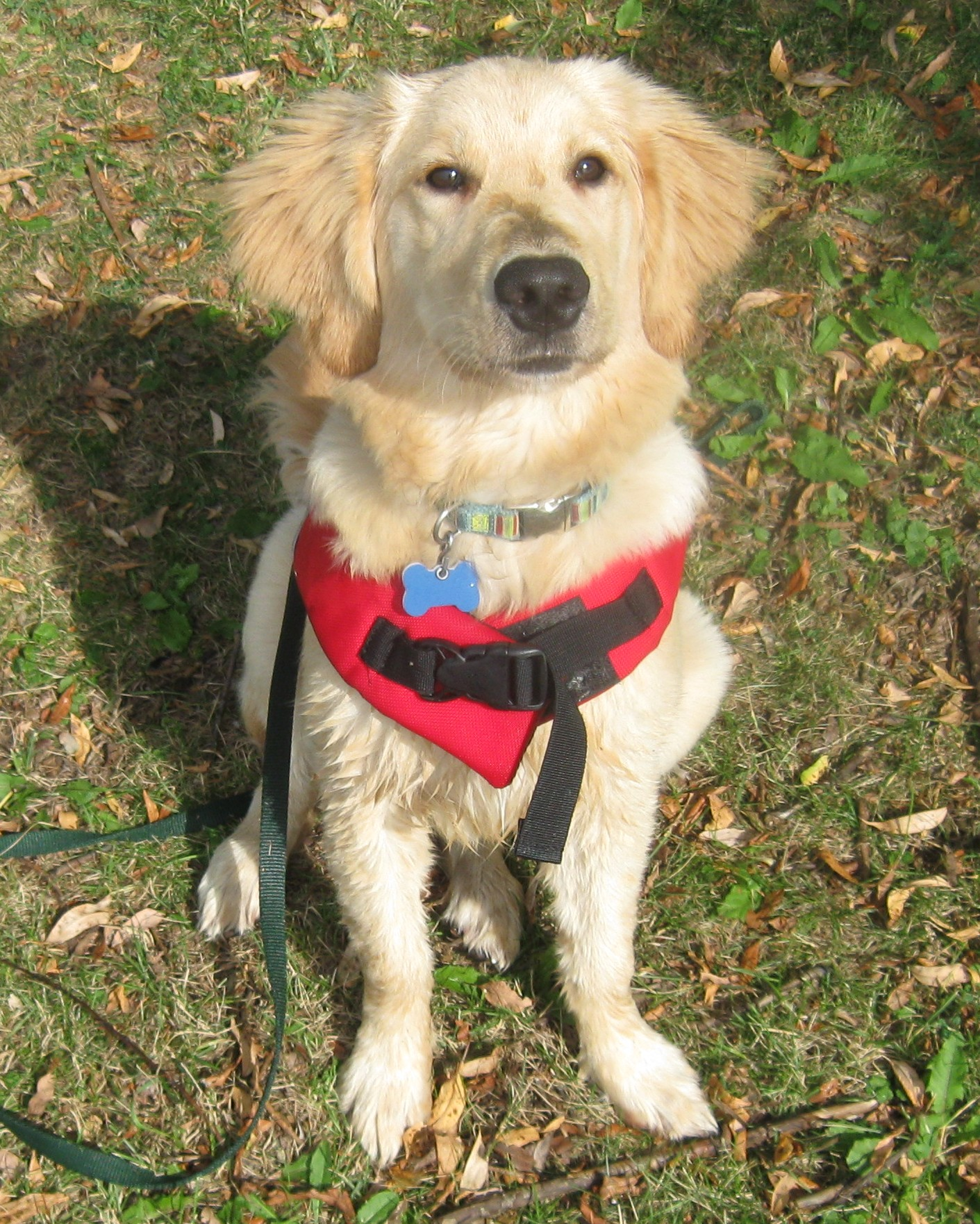 10 Reasons Your Dog Needs A Life Jacket