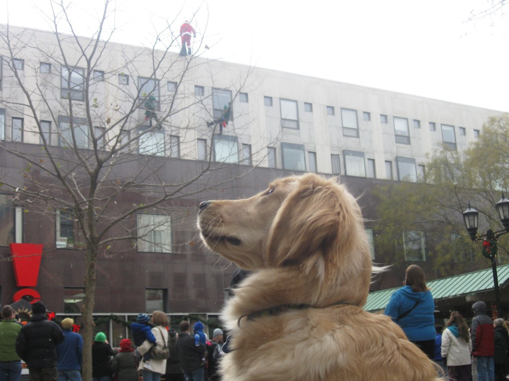 Golden Retriever and Santa on the Ithaca Commons