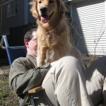 Golden Retriever sitting on Mike's lap