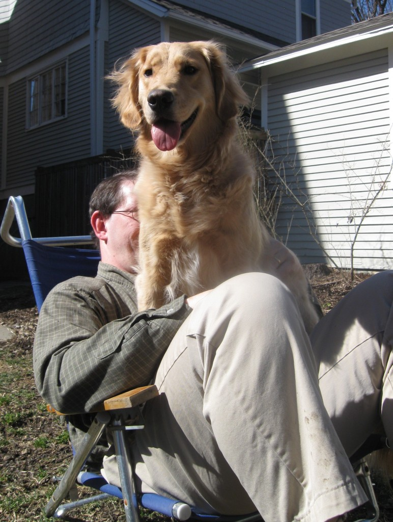Golden Retriever sitting on Mike's lap