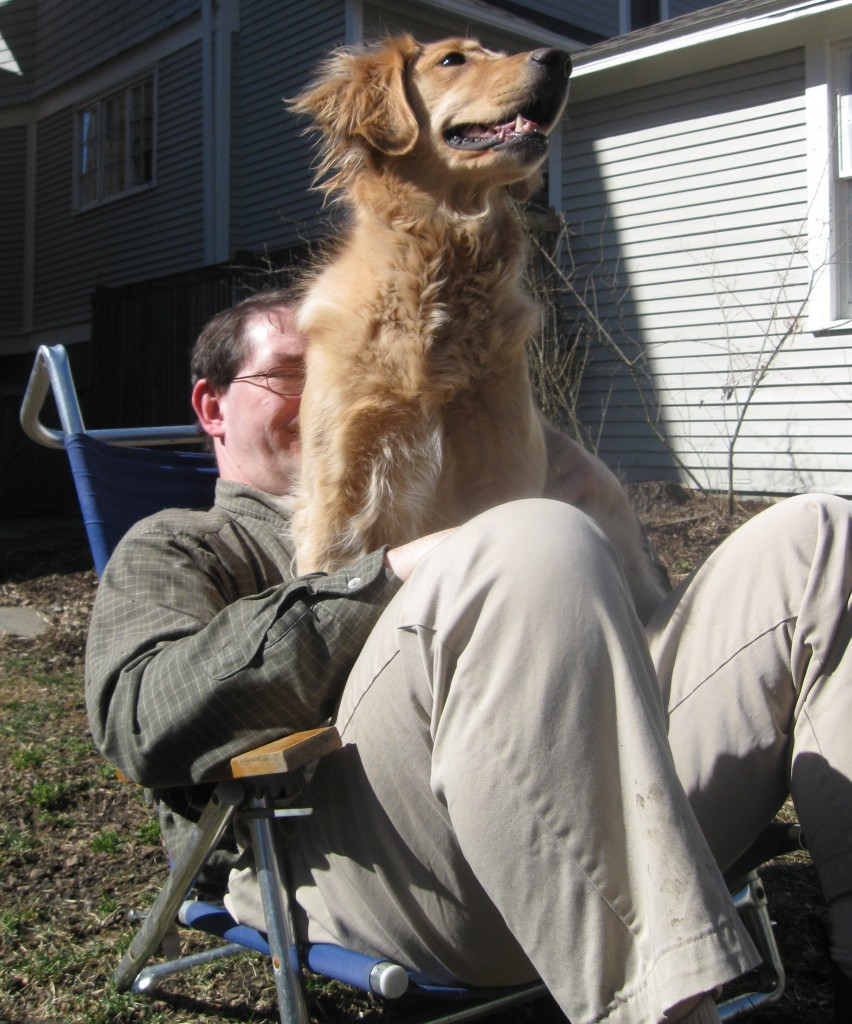 Honey the Golden Retriever enjoys the view from Mike's lap.
