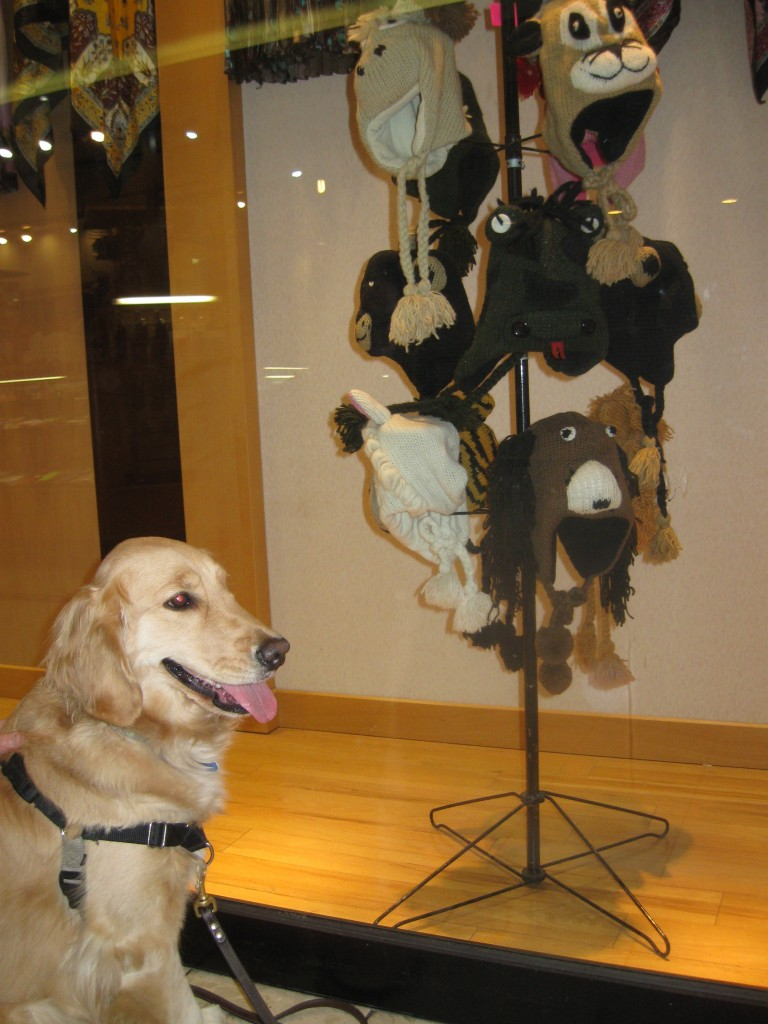 Golden Retriever admiring a display of knitted animal  hats