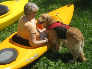 Golden Retriever practicing with kayak on dry land.