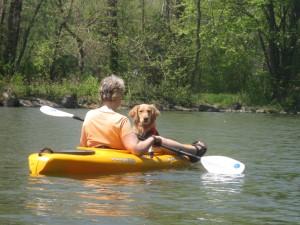 Golden Retriever in kayak