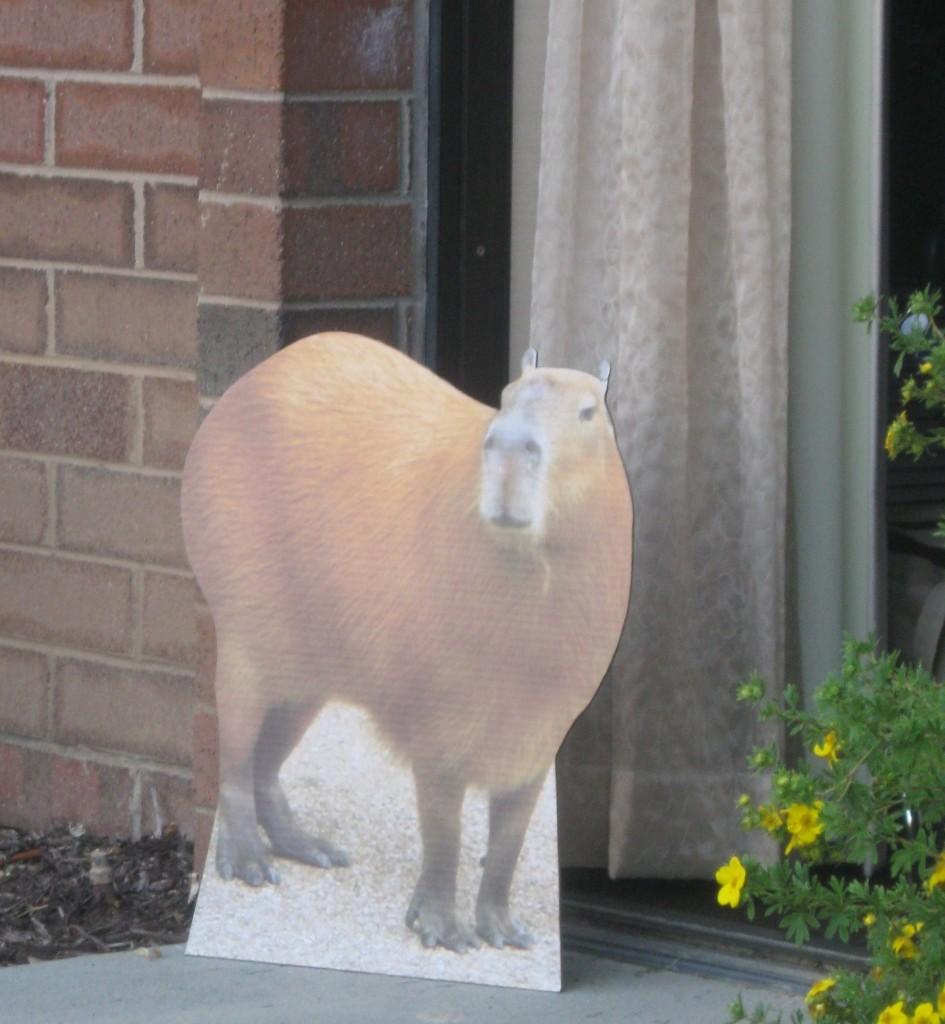 Capybara at BlogPaws