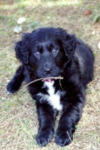 Secret Pup 2
