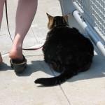 Norton the Traveling Cat Trilogy – Pet Travel Book Club