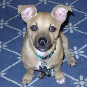 Secret Pup 10