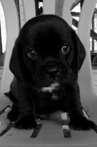 Secret Pup 7
