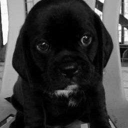 Secret Pup A