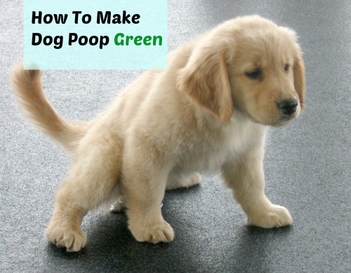 How To Make Dog Poop Green