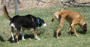 Dog Play Group at Tompkins County SPCA