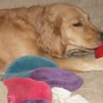 Wacky Pet Products: Pet Paint