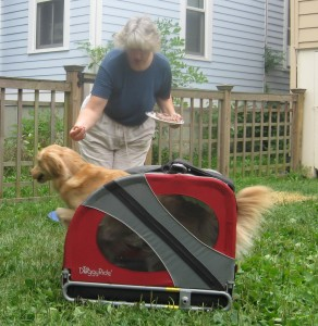 Golden Retriever jumping through Doggy Ride bicycle cart.