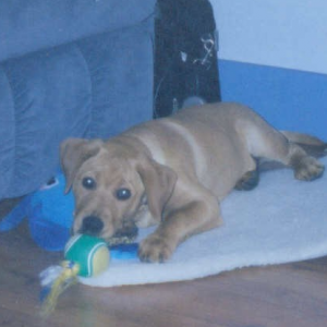 Pup 1: Sampson