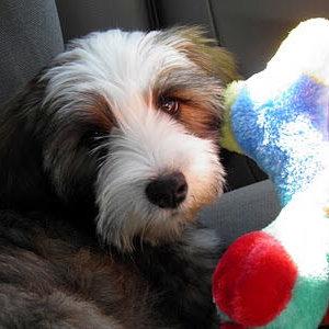 Secret Pup 6