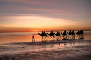 Camels on Cable Beach on the Indian Ocean