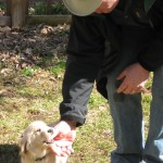 Looking Back: 5 Reasons to Chart Your Dog Training Progress