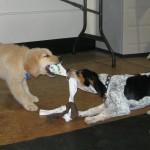 Greco-Doggie Wrestling