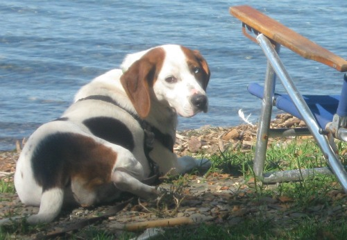 Hound Mix on shore of Cayuga Lake