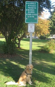 Golden Retriever in Front of Dogs Not Allowed Sign