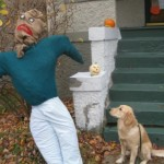 Golden Retriever looks at Scarecrow
