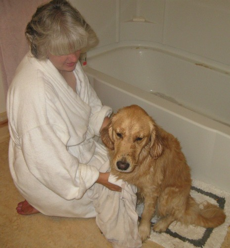 Bath Time for Honey the Golden Retriever