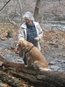 Honey the Golden Retriever on the log at Ithaca Falls
