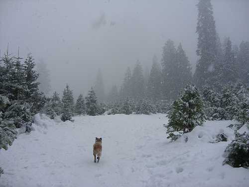 Man's Best Friend finding the perfect Christmas tree.