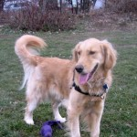 When Is Your Dog Safe Off Leash?