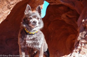 Roxy in Little Black Mountain of Arizona.