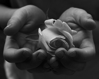 Child presenting a peace rose.