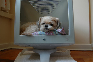Dog bed in a computer monitor.