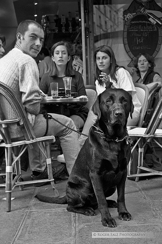 Dog posing at Paris Cafe