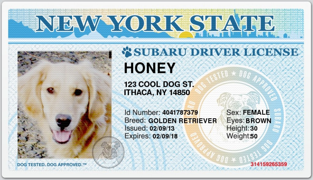 Honey's Subaru NY Driver's License