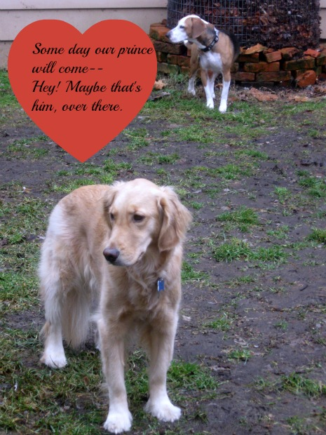 Honey the Golden Retriever and Layla the beagle are looking for love.