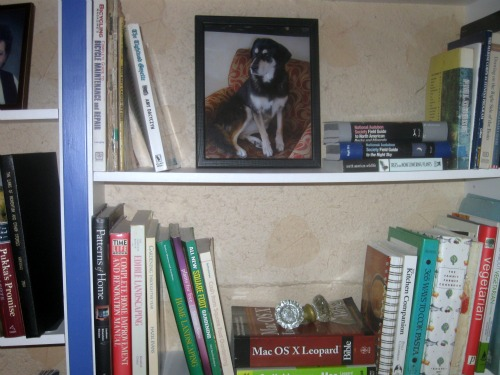 A picture of my dog Shadow guards my bookshelf.