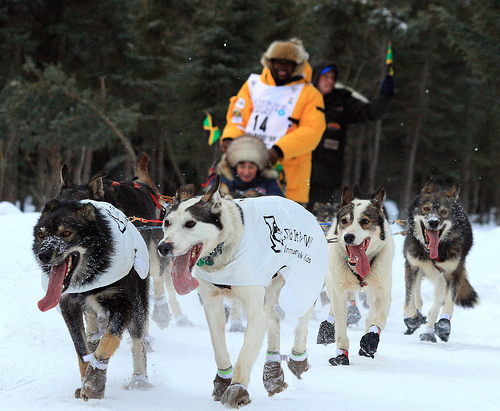 Newton Marshall, Jamaican Musher, at the 2010 Iditarod.