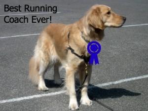 Honey the Golden Retriever is my running coach.