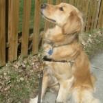 Puppies in Your Neighborhood – Musical Wordless Wednesday