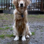 Play in the Mud – Good for the Dog; Good for You