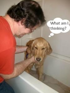 Honey the Golden Retriever takes a bath.