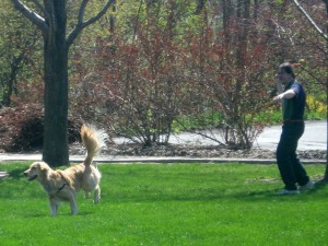 """good dog owner vs bad dog Eventually, the husky owner and his two dogs came down the street, and as they passed the house with the cat, he saw the huskies' owner let out their retractable leashes and heard him say, """"get 'im."""