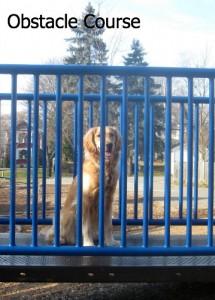 Honey the Golden Retriever at the Fall Creek Playground.