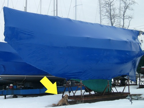 Honey the Golden Retriever poses with the keel of a sailboat out of the water.