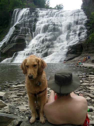 Honey the Golden Retriever turns her back to the Ithaca Falls.