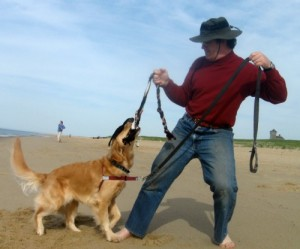 Honey the Golden Retriever plays tug with her person on the beach.