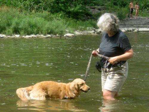 Honey the Golden Retriever wades chest deep in Fall Creek.