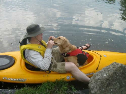 Honey the Golden Retriever is a dog who likes to kayak.